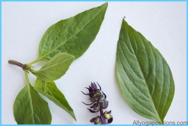 What is Basil, sweet? How to Use Basil, sweet_1.jpg