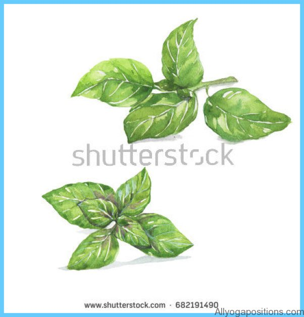 What is Basil, sweet? How to Use Basil, sweet_12.jpg