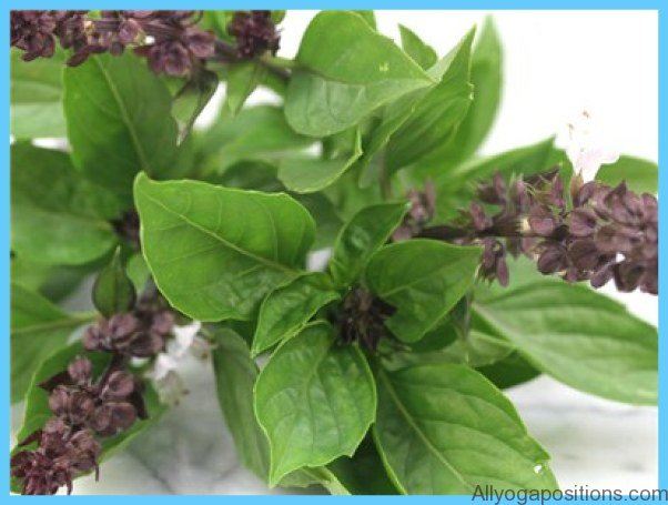 What is Basil, sweet? How to Use Basil, sweet_17.jpg