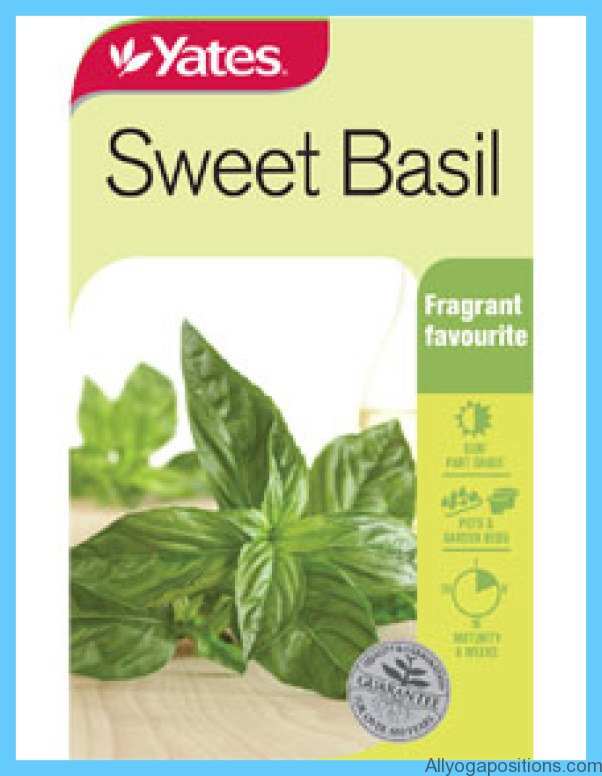 What is Basil, sweet? How to Use Basil, sweet_6.jpg