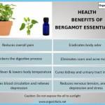 What is Bergamot? How to Use Bergamot_10.jpg