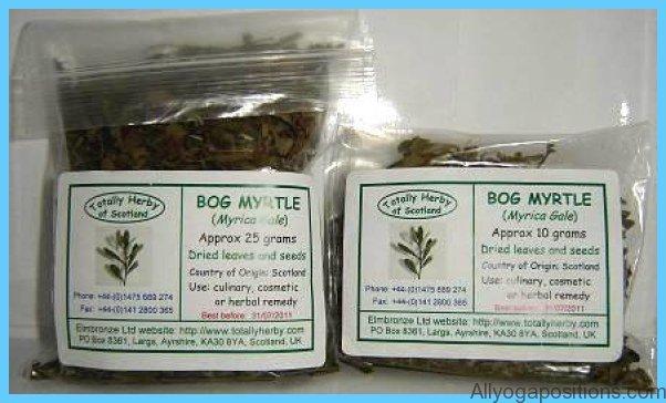 What is Bog Myrtle? How to Use Bog Myrtle_13.jpg