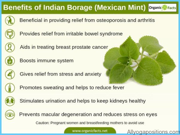 What is Borage? How to Use Borage_14.jpg
