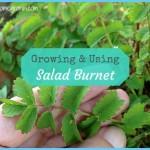 What is Burnet? How to Use Burnet_15.jpg
