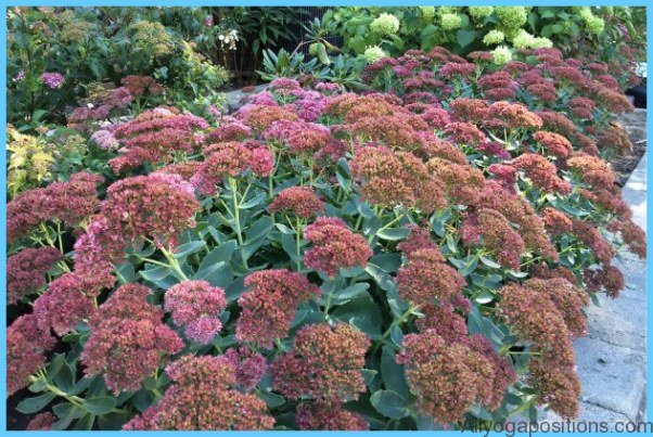 What is Stonecrop and How Do You Use It?_13.jpg