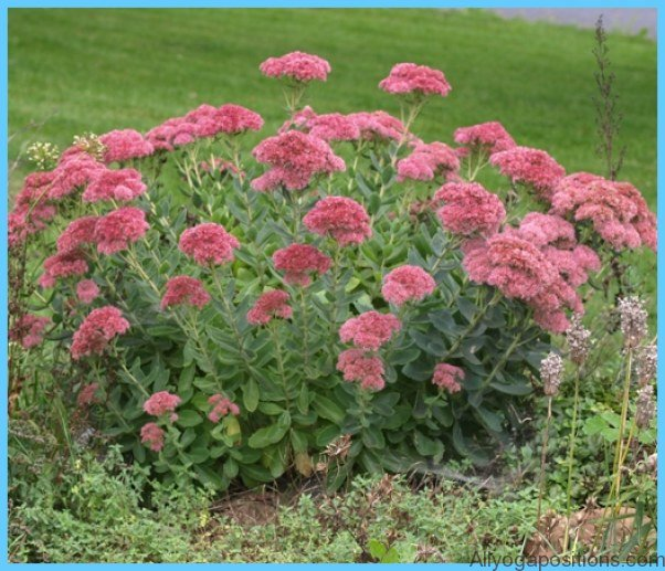 What is Stonecrop and How Do You Use It?_15.jpg