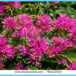 What is Stonecrop and How Do You Use It?_6.jpg