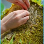 What is Sunflower and How Do You Use It?_1.jpg
