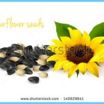 What is Sunflower and How Do You Use It?_7.jpg