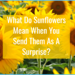 What is Sunflower and How Do You Use It?_9.jpg