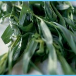 What is Tarragon and How Do You Use It?_0.jpg