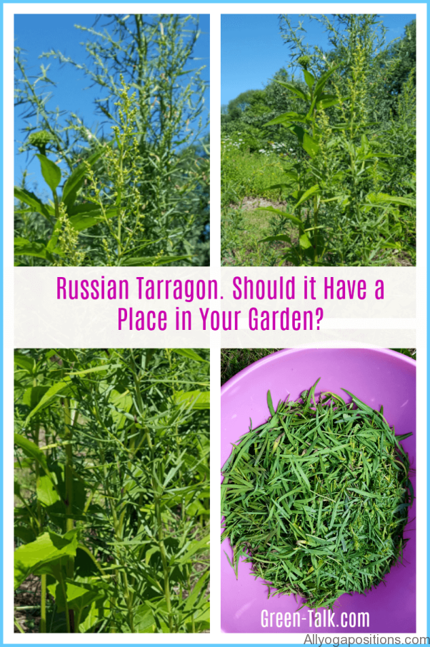 What is Tarragon and How Do You Use It?_10.jpg