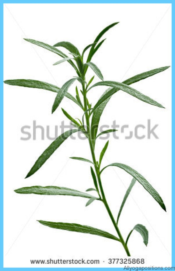 What is Tarragon and How Do You Use It?_11.jpg