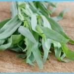 What is Tarragon and How Do You Use It?_12.jpg