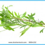 What is Tarragon and How Do You Use It?_14.jpg