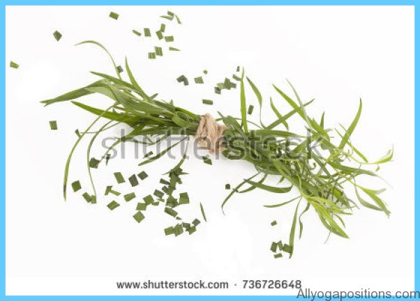 What is Tarragon and How Do You Use It?_15.jpg
