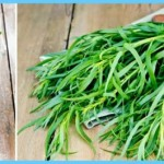 What is Tarragon and How Do You Use It?_3.jpg