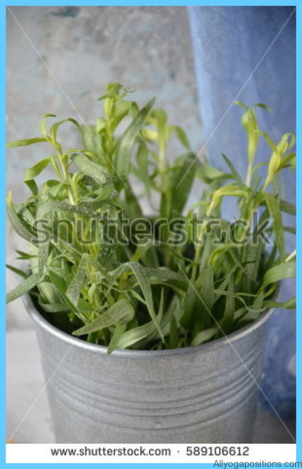 What is Tarragon and How Do You Use It?_4.jpg