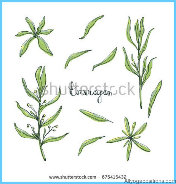 What is Tarragon and How Do You Use It?_7.jpg