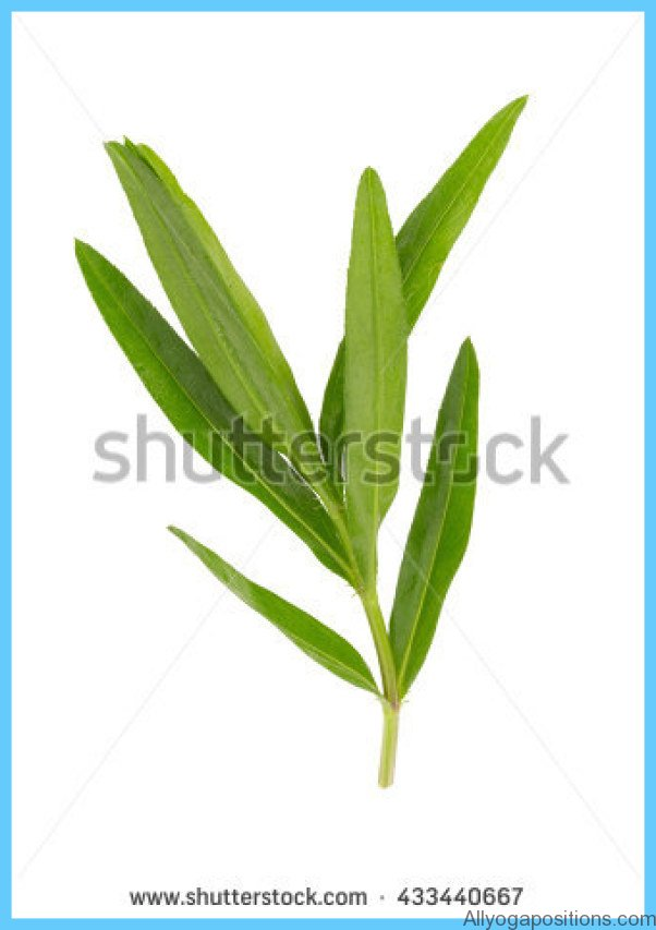 What is Tarragon and How Do You Use It?_9.jpg