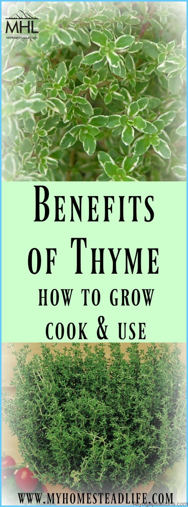 What is Thyme and How Do You Use It?_0.jpg