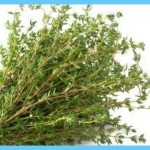 What is Thyme and How Do You Use It?_11.jpg
