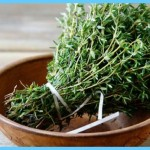 What is Thyme and How Do You Use It?_16.jpg