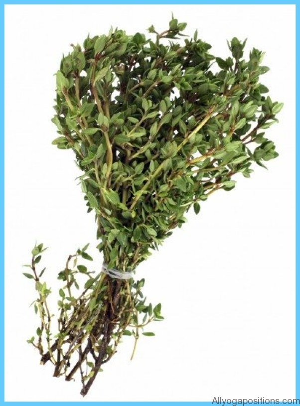 What is Thyme and How Do You Use It?_4.jpg