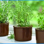 What is Thyme and How Do You Use It?_8.jpg