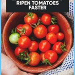 What is Tomato and How Do You Use It?_19.jpg