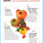 What is Tomato and How Do You Use It?_3.jpg