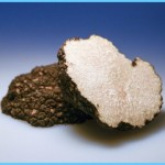 What is Truffle and How Do You Use It?_10.jpg