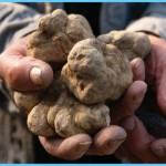 What is Truffle and How Do You Use It?_11.jpg