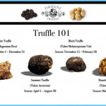 What is Truffle and How Do You Use It?_8.jpg