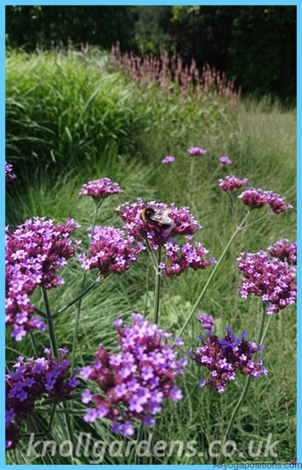 What is Verbena and How Do You Use It?_9.jpg
