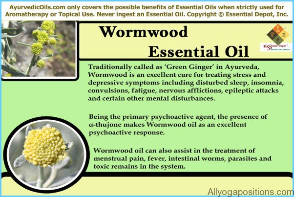 What is Wormwood and How Do You Use It?_11.jpg