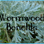 What is Wormwood and How Do You Use It?_14.jpg