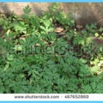 What is Wormwood and How Do You Use It?_15.jpg