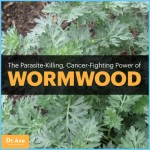 What is Wormwood and How Do You Use It?_17.jpg