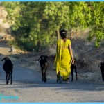 Why World Animal Protection? | World Animal Protection International
